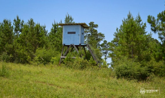 Timberland for sale near Burkeville Texas