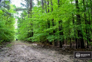 Land for sale near Hemphill Texas