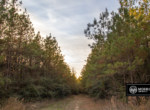 Hunting property for sale in Beauregard Parish, Louisiana