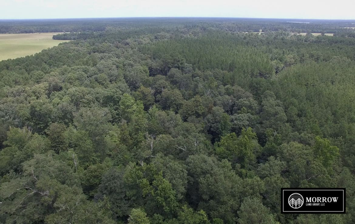 Land for sale in Beauregard Parish, LA