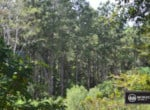 Old FM 705 Tract A | San Augustine County Texas