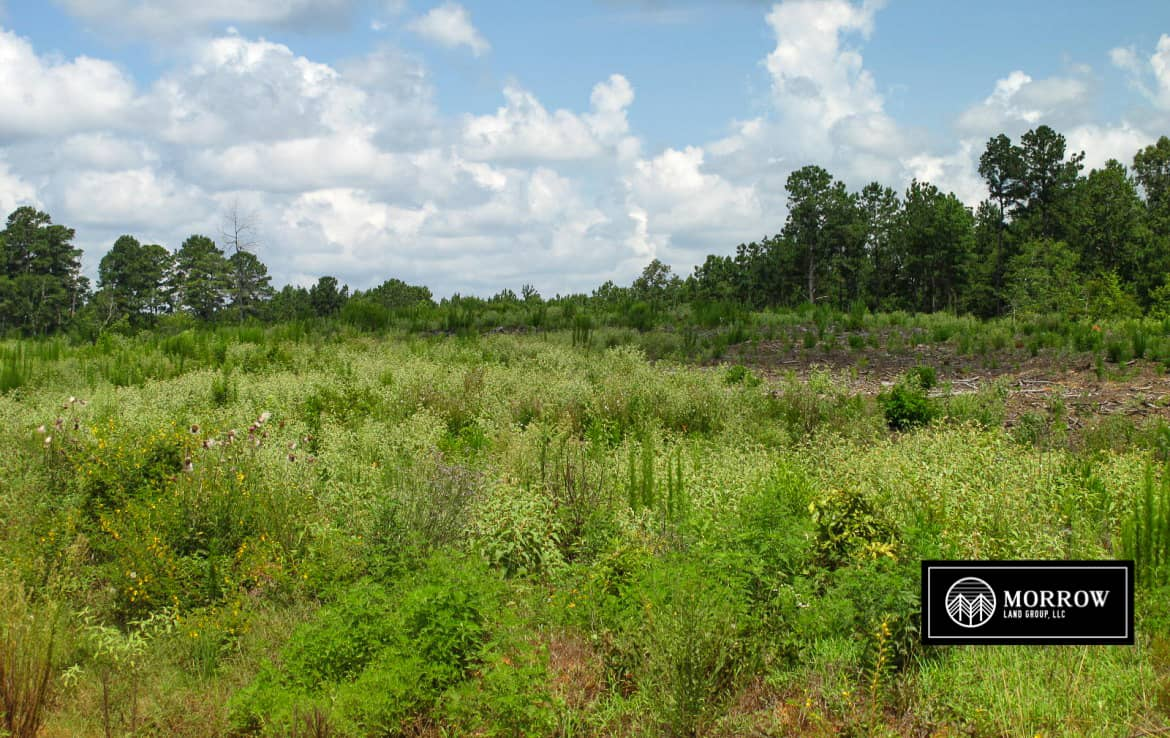 25 acres for sale near Robeline, Louisiana