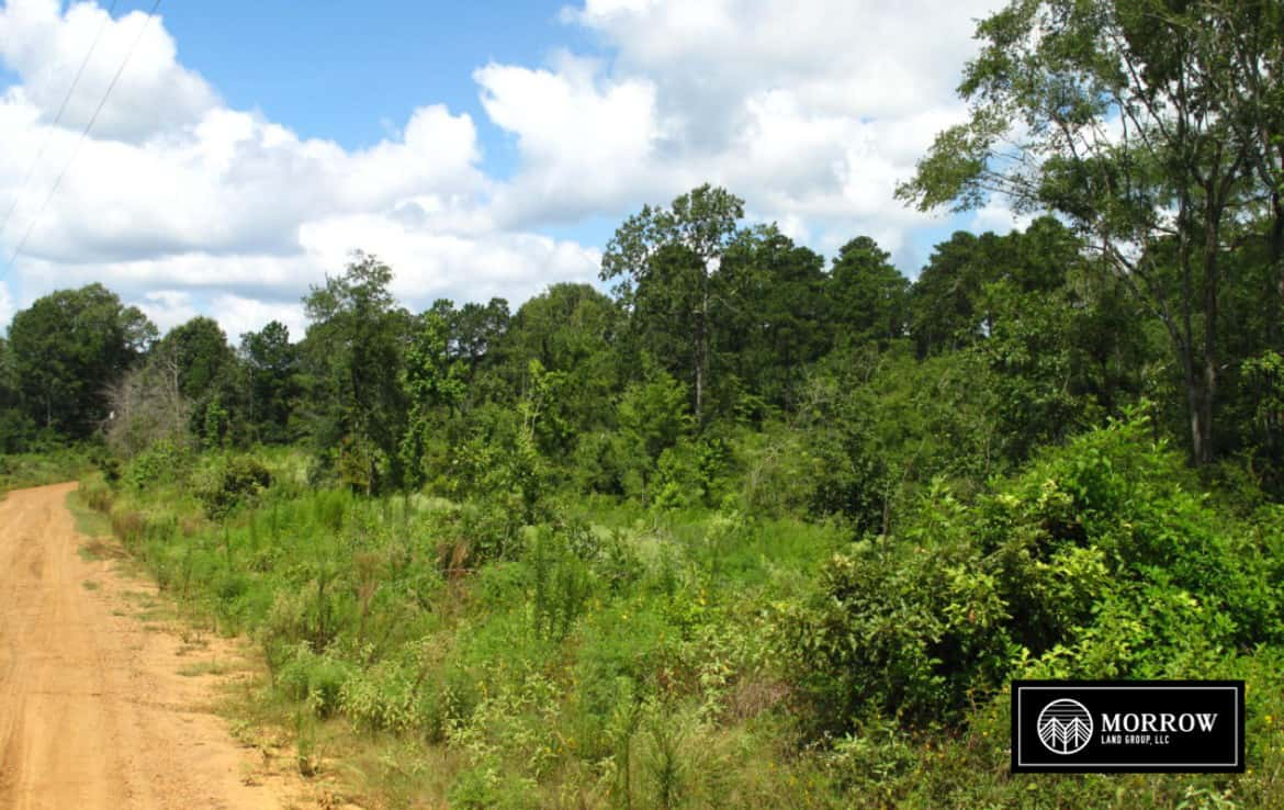 Land for sale in Robeline, LA