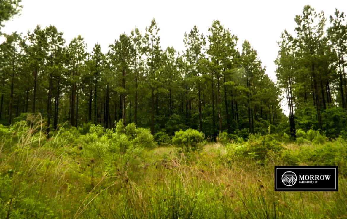 Land for Sale in Rusk County