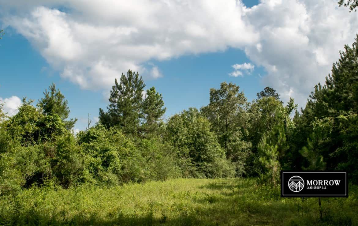 Deer hunting property for sale in Louisiana