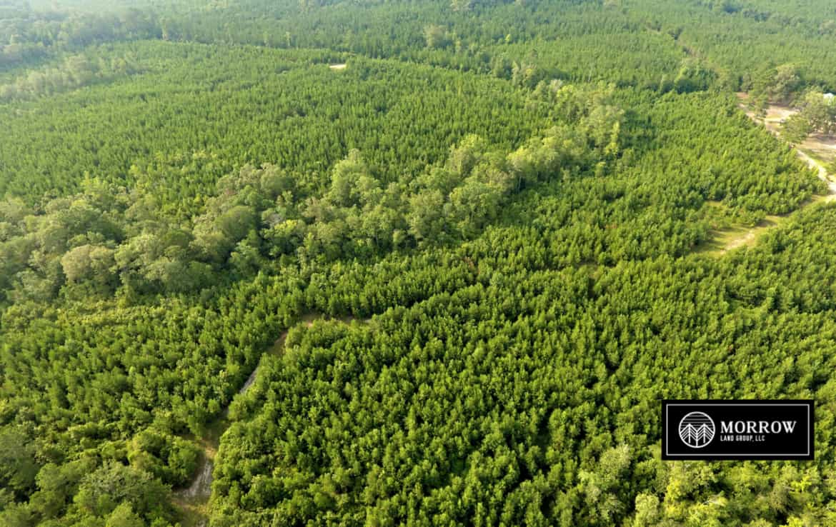 Property for sale off of Laurel Hill Road in Lacamp, Louisiana