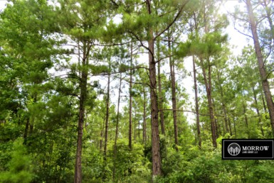 Timber property for sale in Lacamp, Louisiana in Vernon Parish