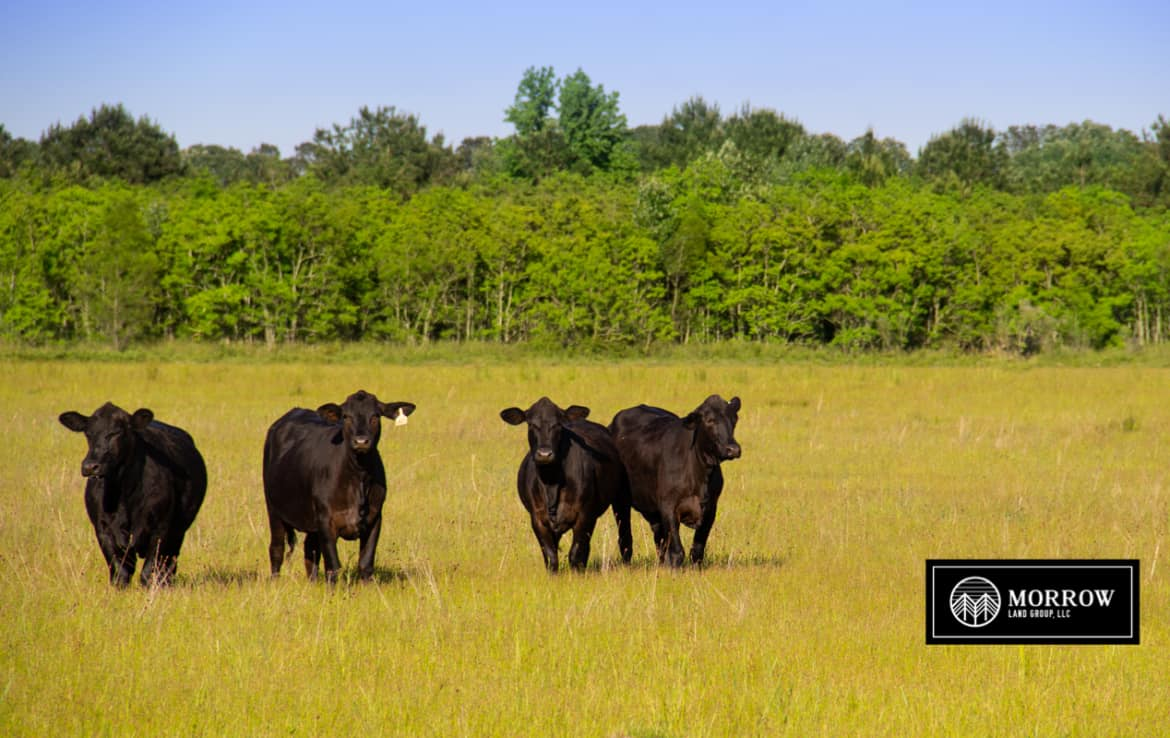 Cleared pasture land for sale in Lake Charles, Louisiana