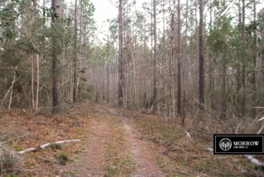 Land for sale in Jasper County, Texas